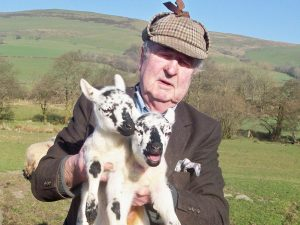 Welsh farmer with lambs