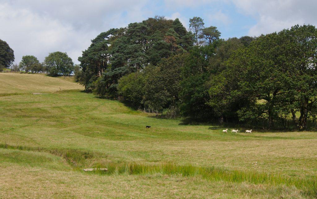 Landscape of the Abergwesyn Sheep Dog Trials