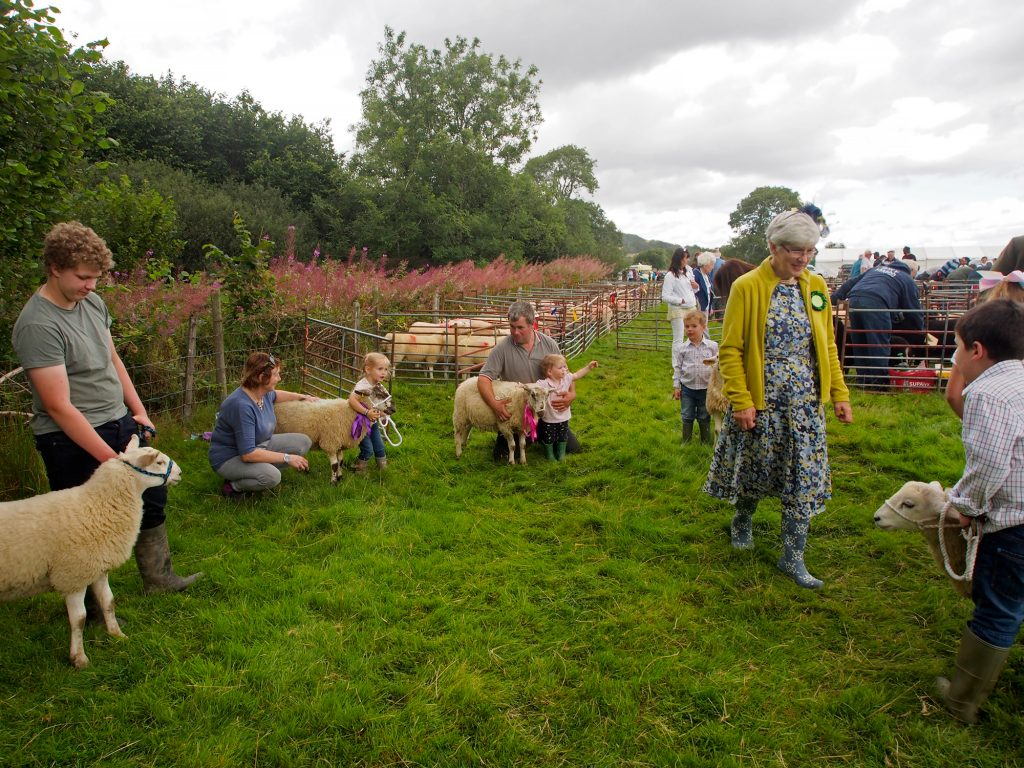 Judging the pet lambs at the Llanwrtyd Wells show.