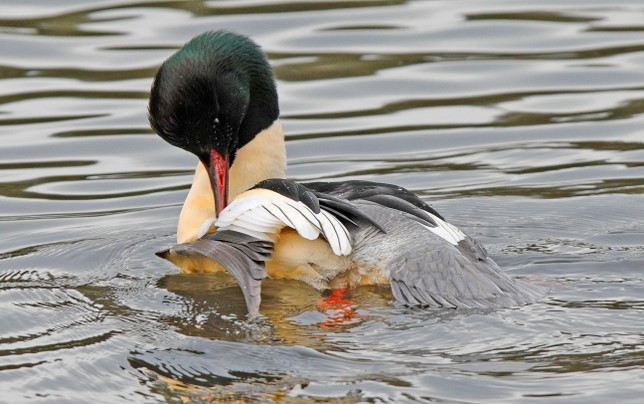 Bird Identification image
