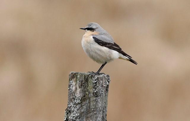 Bird identification image.